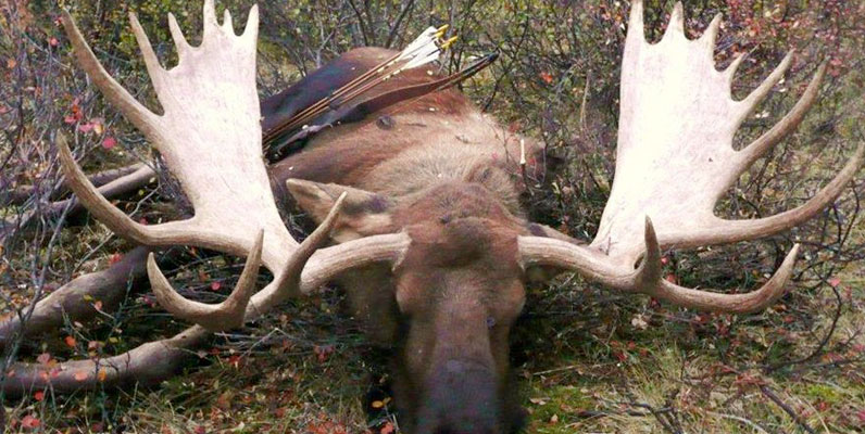 A Solo Moose Hunt and Memorial to a Friend