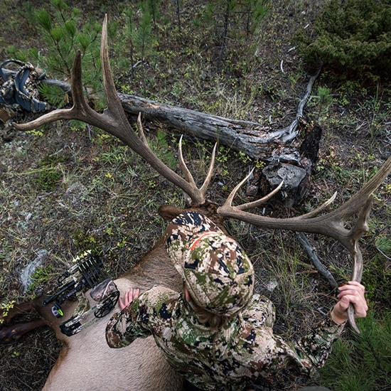 7 Tips For Arrowing More Bull Elk